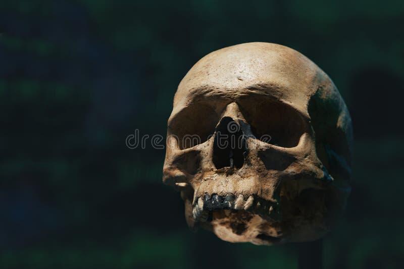 Mänsklig skalle av ett skelett i benrest Evolution- och speciebegrepp mot en svart bakgrund tomt kopieringsutrymme arkivbild
