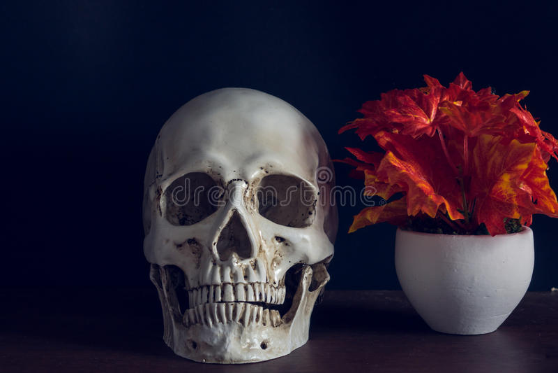 Mänsklig skalle bredvid blommavasen royaltyfri foto