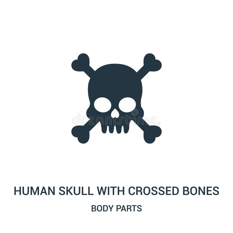 mänsklig skalle med den korsade vektorn för benkontursymbol från kroppsdelsamling Tunn linje mänsklig skalle med korsade ben royaltyfri illustrationer