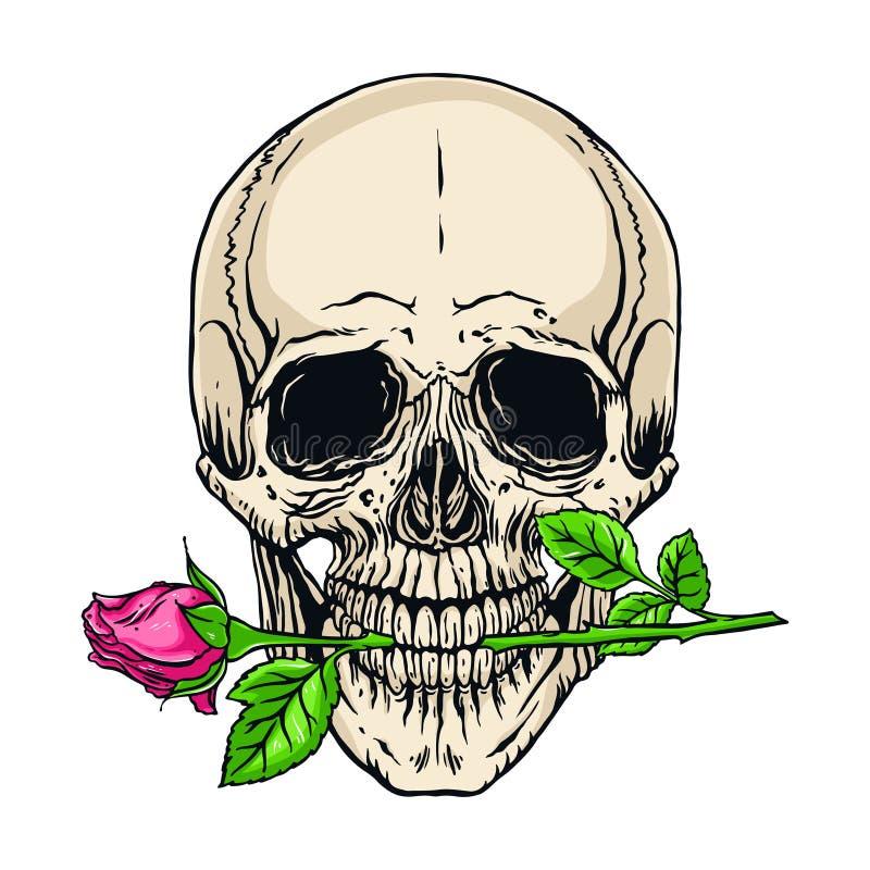 Mänsklig skalle med en ros stock illustrationer