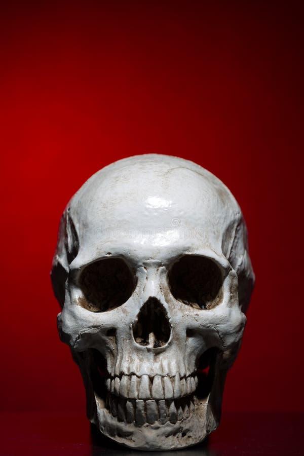 Mänsklig skalle nära mörkröd bakgrund arkivbilder