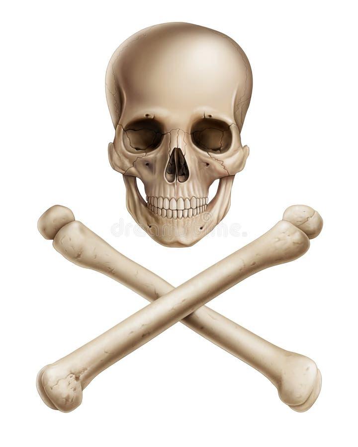 Mänsklig skalle och arga ben på vit bakgrund royaltyfri illustrationer