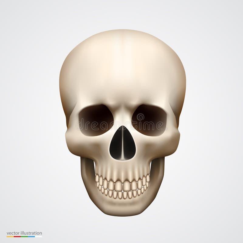 Mänsklig skalle som isoleras på vit vektor illustrationer