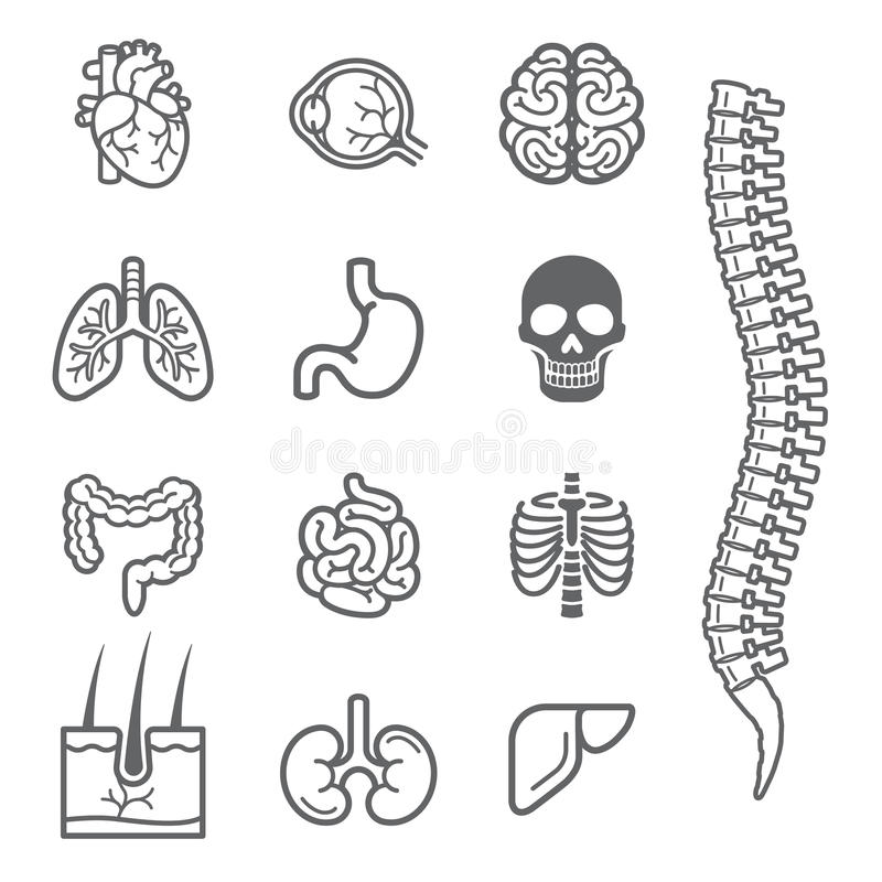 Mänsklig specificerad symbolsuppsättning för inre organ stock illustrationer