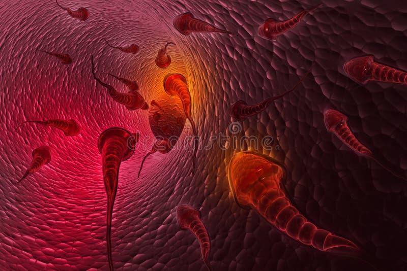 mänsklig sperma stock illustrationer