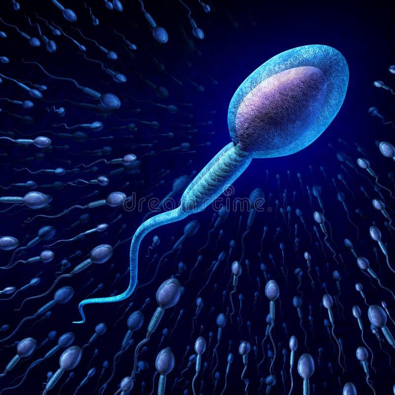 Mänsklig spermacell stock illustrationer