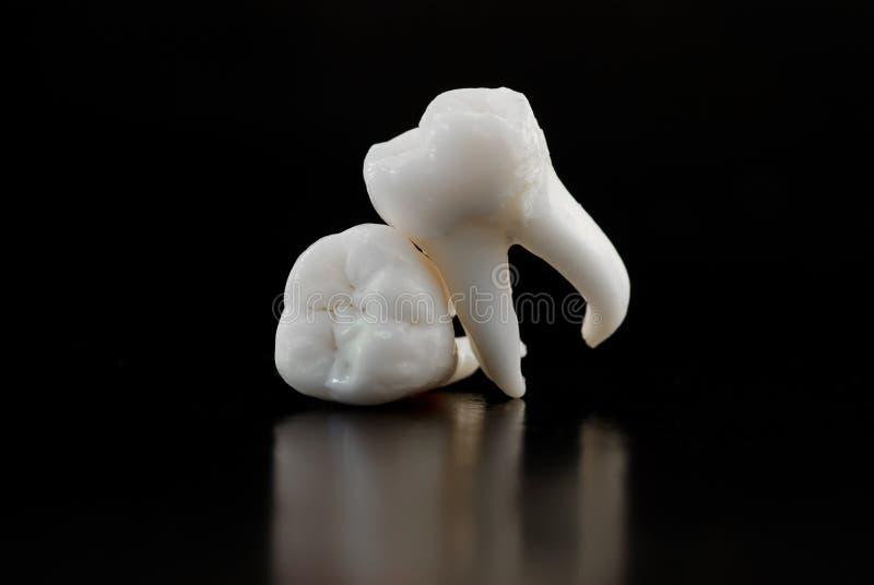 mänsklig tandvishet arkivbild