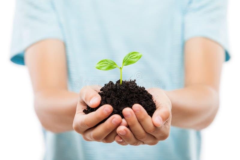 Mänsklig tillväxt för blad för grodd för handinnehavgräsplan på smutsjord royaltyfri bild