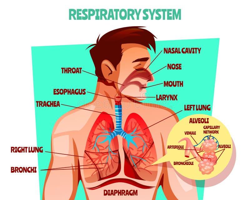 Mänsklig vektorillustration för respiratoriskt system stock illustrationer