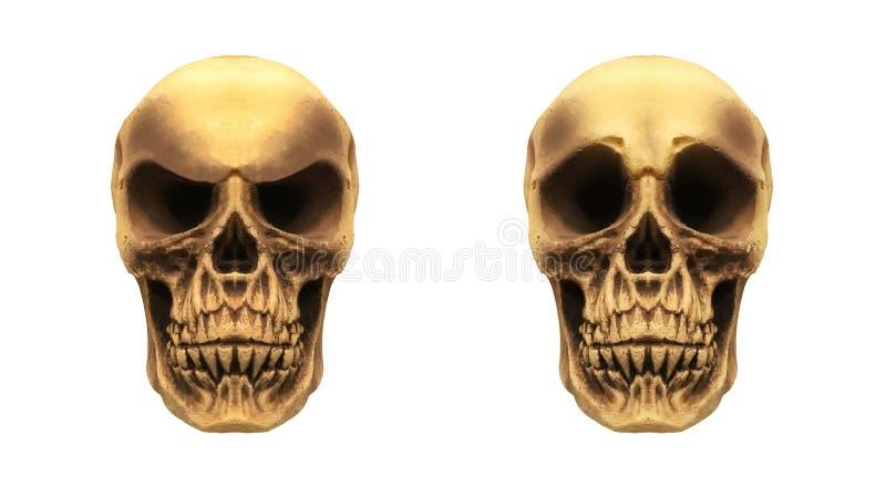 Mänsklig version för skallar två stock illustrationer