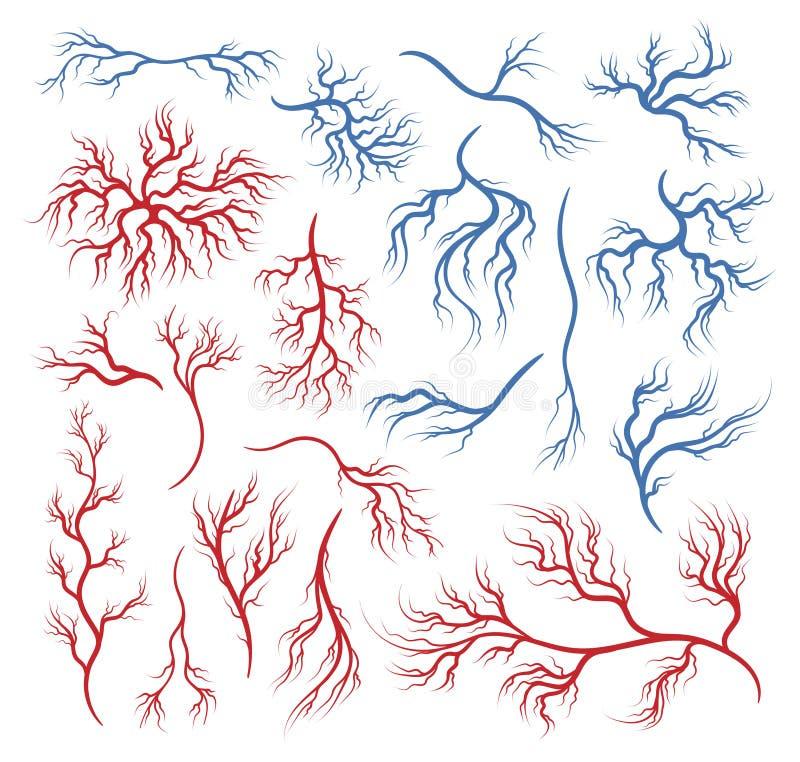 Mänskliga åder och artärer vektor illustrationer