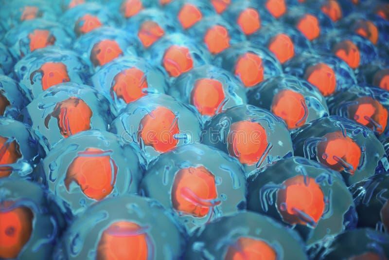 mänskliga celler för illustration 3D Cellkoloni Begrepp av vetenskap och medicin, regenereringen av celler, förnyandet av stock illustrationer