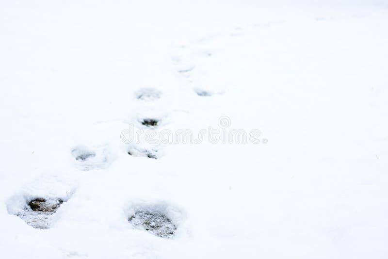Mänskliga fotspår i nytt stupad snö royaltyfri bild