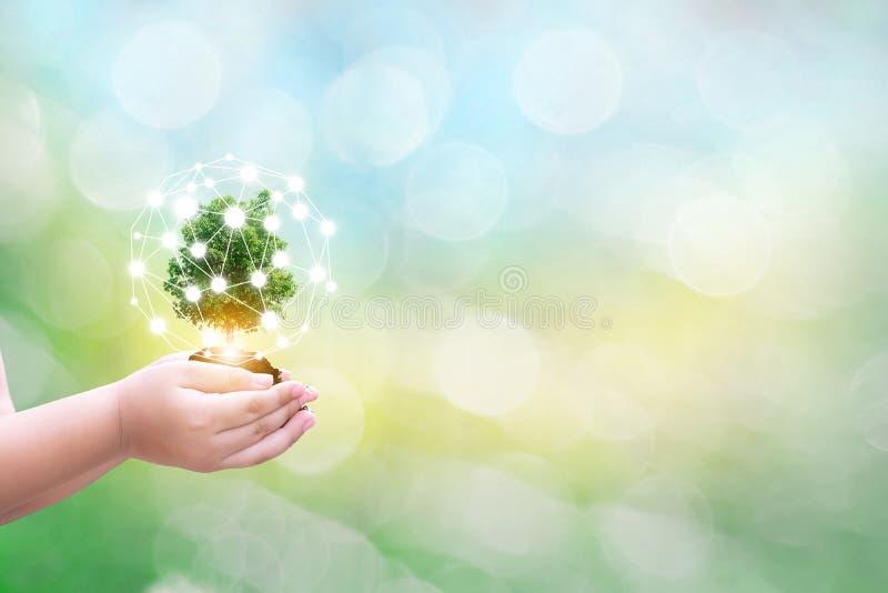 Mänskliga händer för ekologibegreppsbarn som rymmer det stora växtträdet med på den suddiga bakgrundsvärldsmiljön begreppet arkivfoto