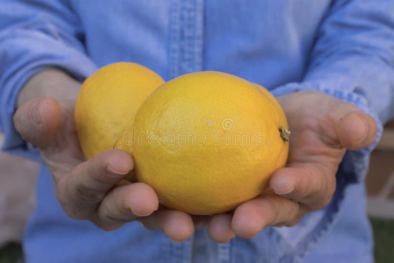 Mänskliga händer som erbjuder citroner royaltyfria bilder