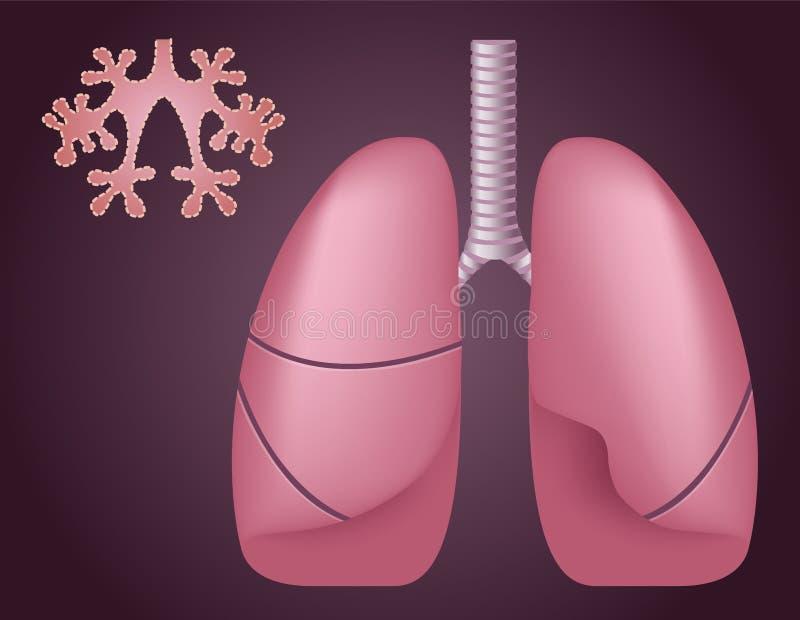 Mänskliga lungaalveoler Medicinsk vetenskap/anatomi royaltyfri illustrationer