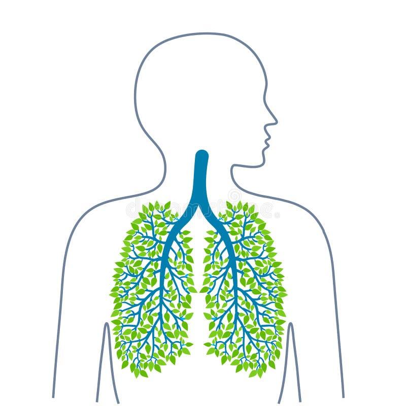 mänskliga lungs Sunda rena lungor bronkial tree Ekologimedicin och hälsa Sund livsstil Vektorilluiostrations royaltyfri illustrationer
