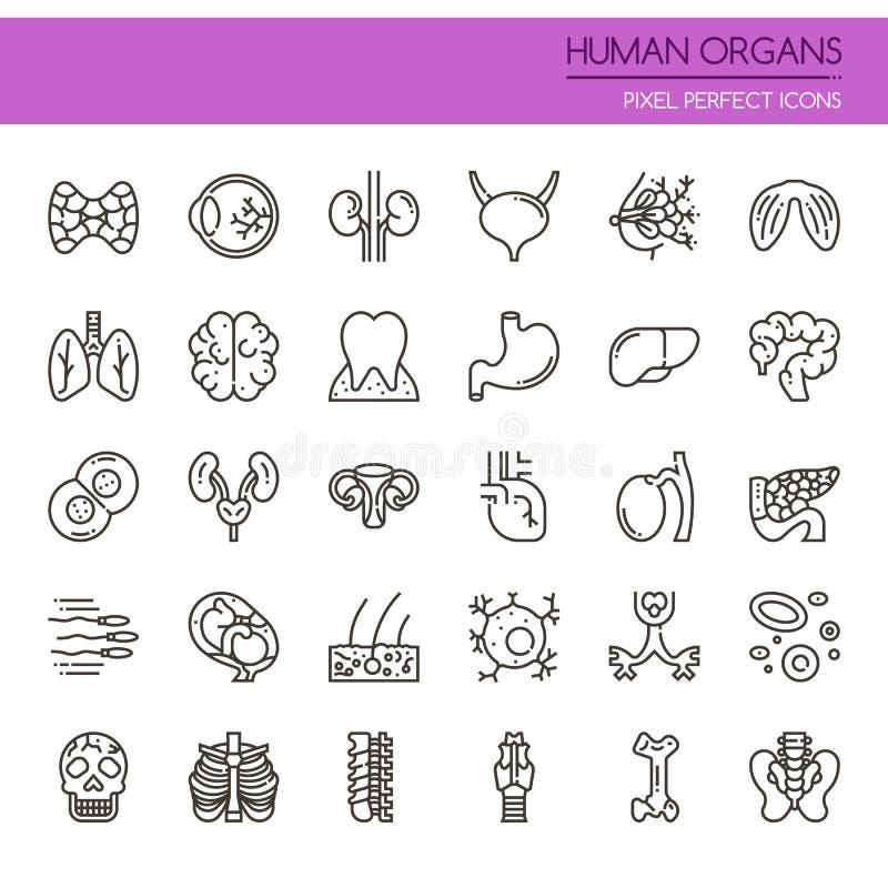 mänskliga organ stock illustrationer