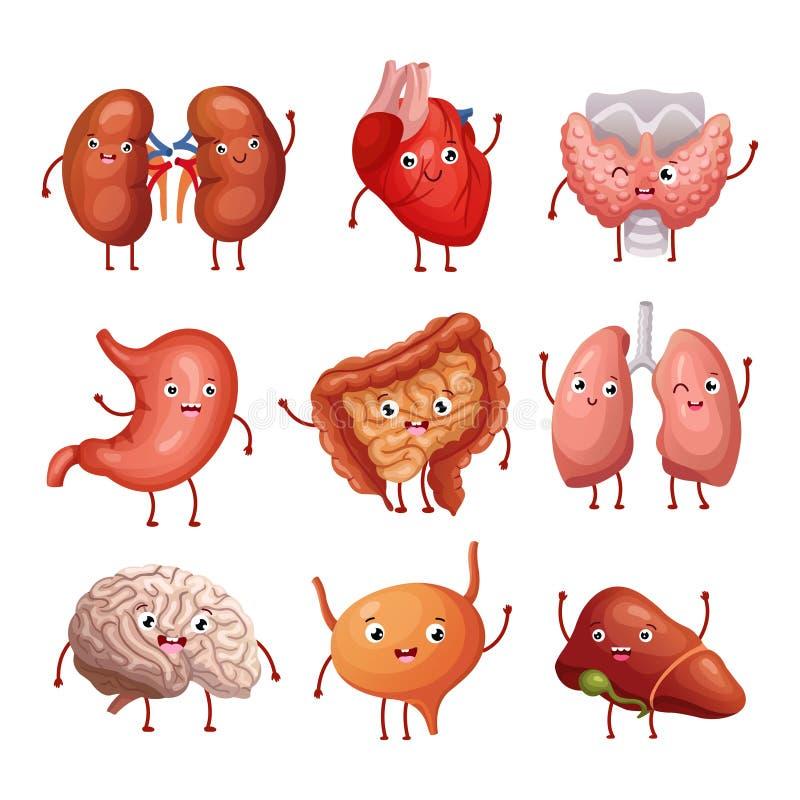 Mänskliga organ för gullig tecknad film Mage, lungor och njure, hjärna och hjärta, lever Rolig inre organvektoranatomi vektor illustrationer