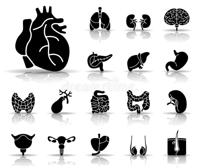Mänskliga organ - Iconset - symboler royaltyfri illustrationer