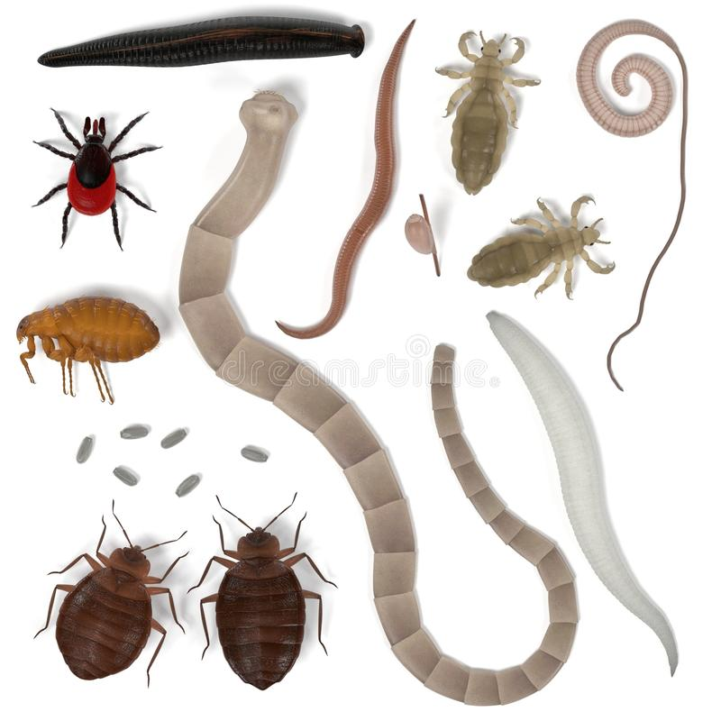 Mänskliga parasit vektor illustrationer