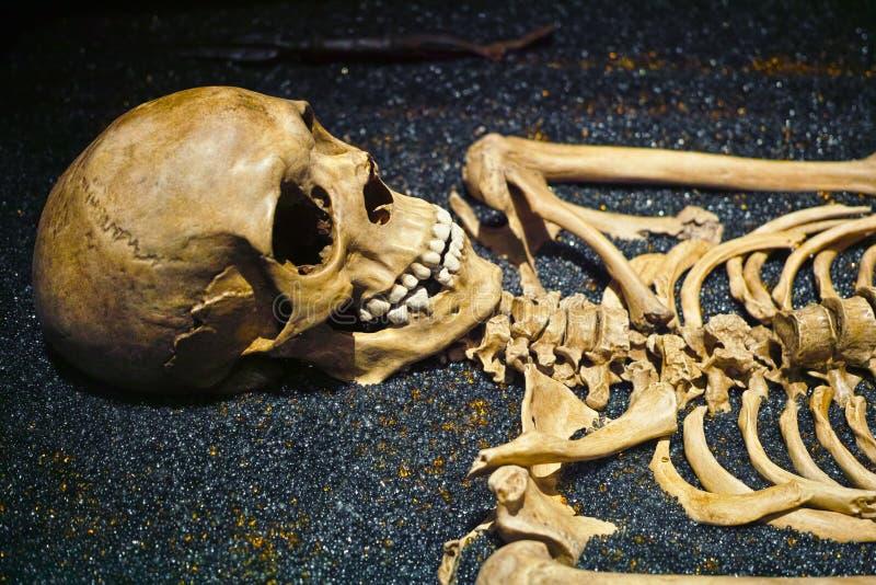 Mänskliga skalle- och skelettben royaltyfri fotografi