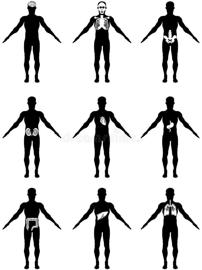 mänskliga symbolsorgan för huvuddel royaltyfri illustrationer