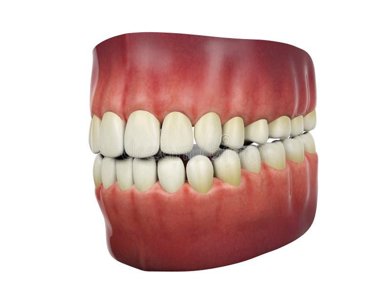 Mänskliga tänder på vit bakgrund stock illustrationer