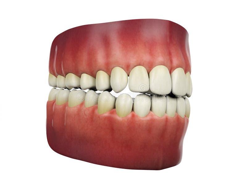 Mänskliga tänder på vit bakgrund royaltyfri illustrationer