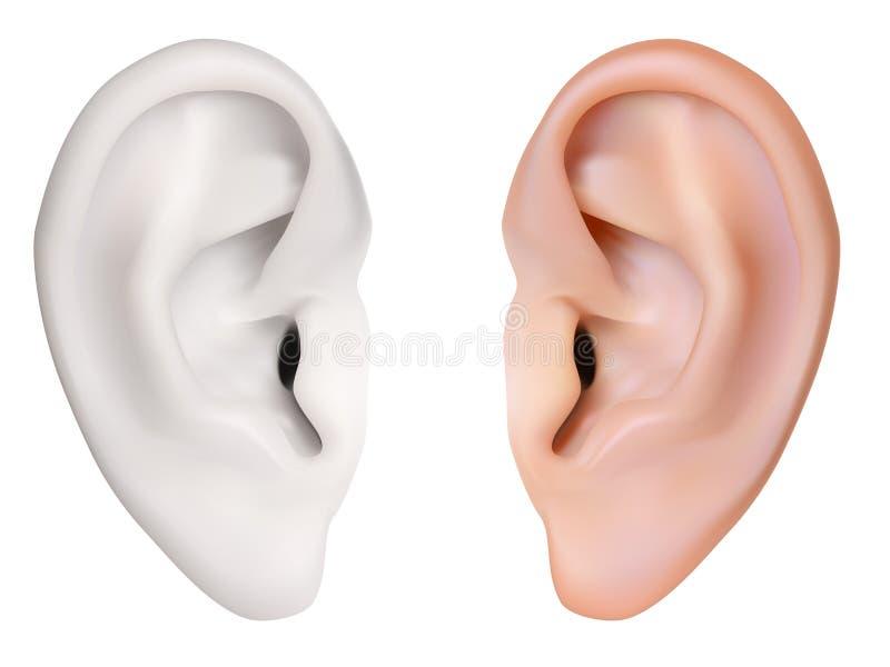 Mänskligt öra. vektor illustrationer