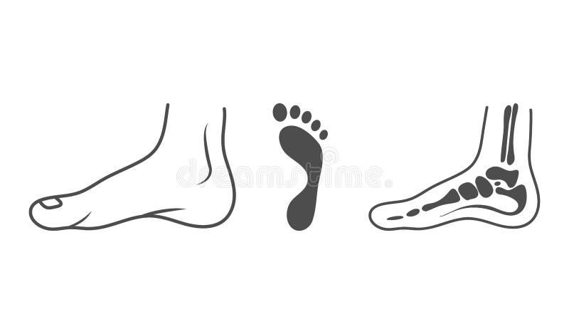 Mänskligt ben, ankel, ben, fotspår, organbegrepp Vektorillustrationen kan användas för ämnen som anatomi, medicin royaltyfri illustrationer