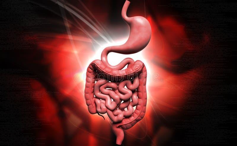 Mänskligt digestivkexsystem stock illustrationer