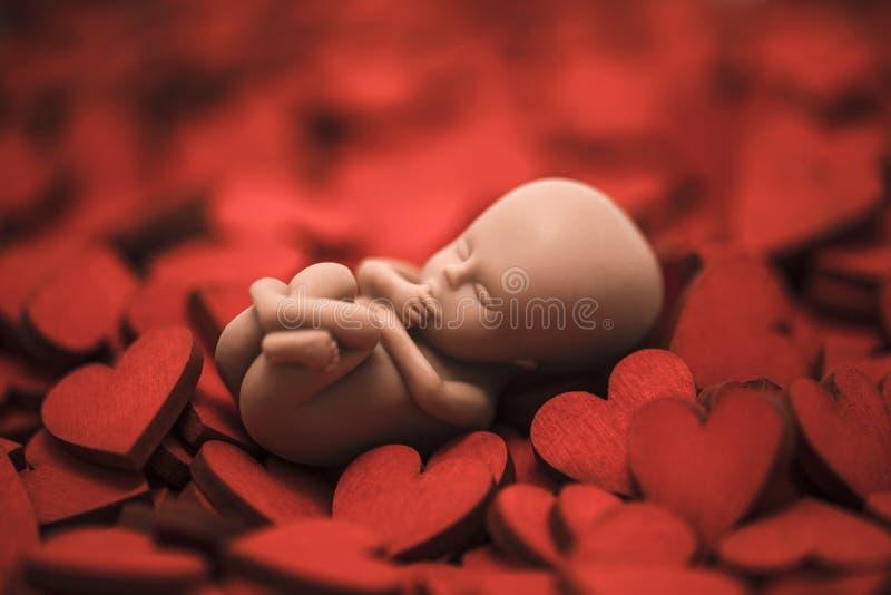 Mänskligt embryo på många röda hjärtor royaltyfri bild