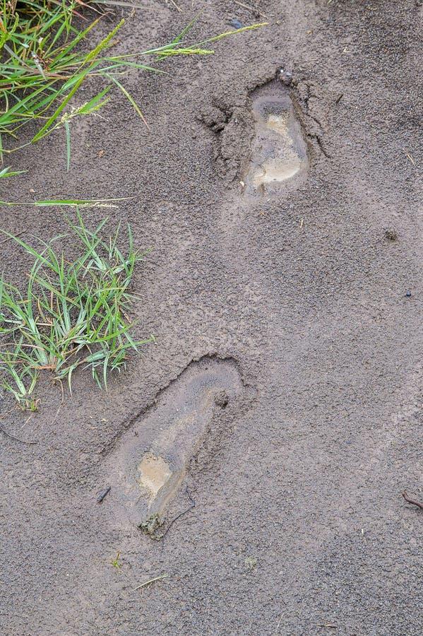 Mänskligt fotspår på våt jord, når att ha regnat dag arkivfoto