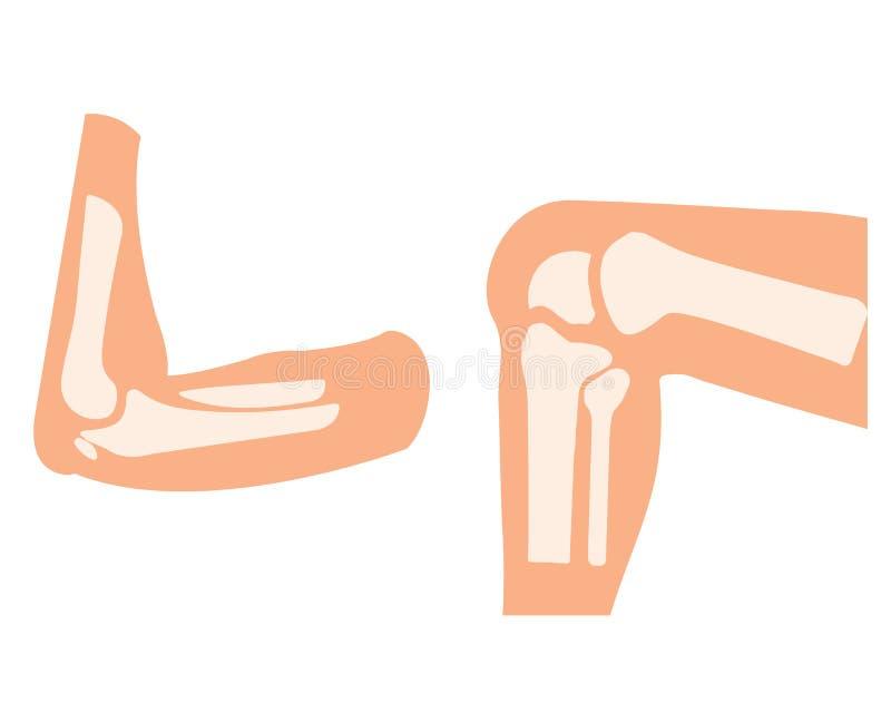 Mänskligt knä- och fotben för vektor och handarmar i en böjelse vektor illustrationer
