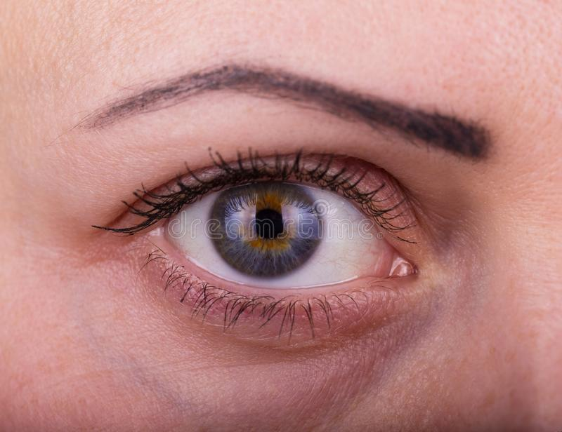 Mänskligt kvinnaöga med dagskönhetmakeup och långa naturliga ögonfrans arkivfoto