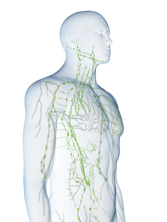 mänskligt lymphatic system stock illustrationer