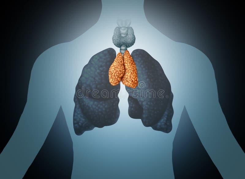 Mänskligt organ för thymuskörtel stock illustrationer