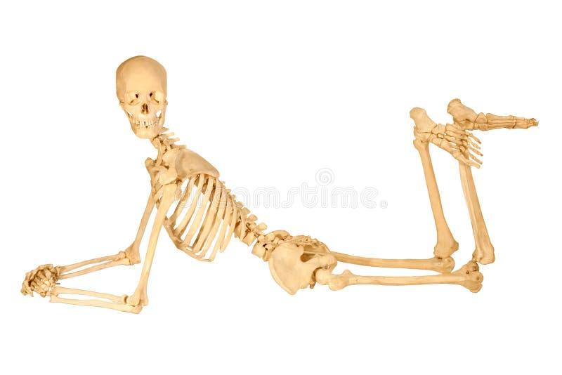 mänskligt posera skelett royaltyfri foto