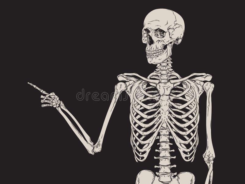 Mänskligt skelett- peka för finger som isoleras över svart bakgrundsvektor royaltyfri illustrationer