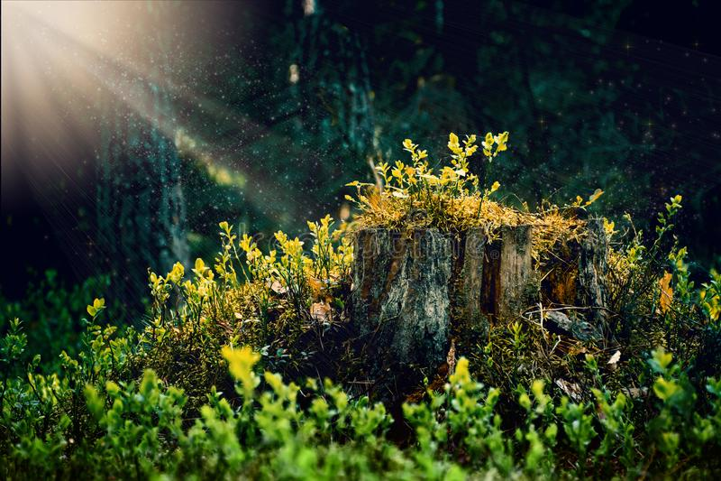 Märchenbaumstumpf, gesägter Baum bedeckt mit dem Moos, überwältigt Laubwechselnd, braun lizenzfreie stockfotografie