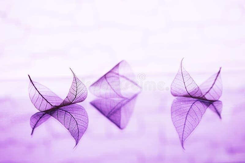 Märchentapete mit transparenten Blättern stockfotografie