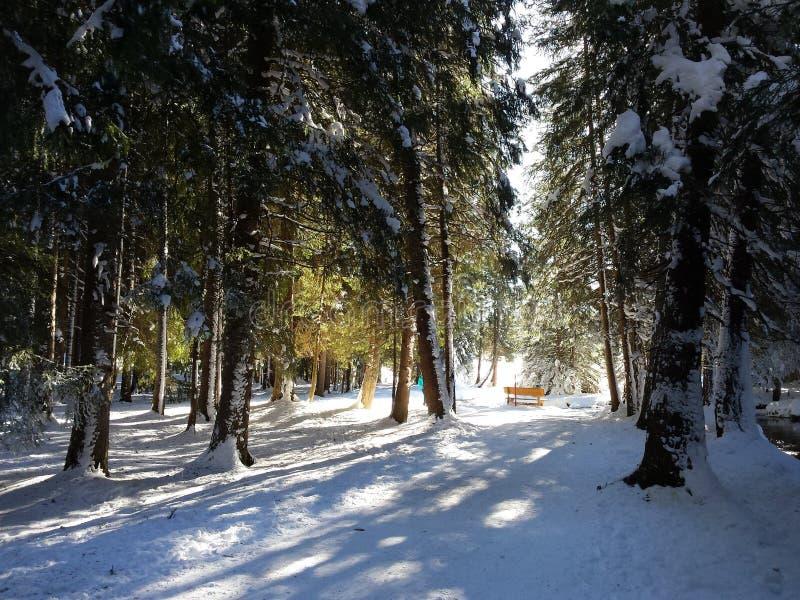 Märchenwald stockfotos