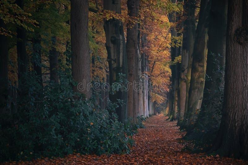 Märchenwald mit mit hohen Bäumen und bunten Blättern aus den Grund stockfotografie