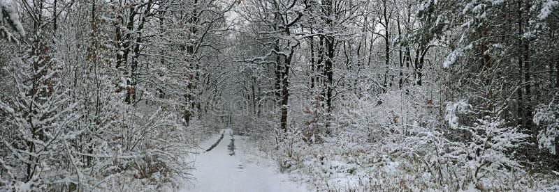 Märchenwinterwald stockfotografie