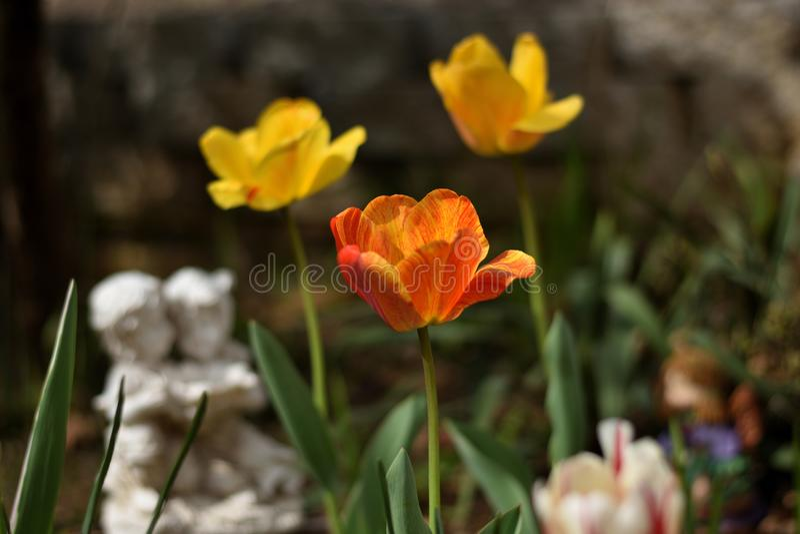 ` Märker hemifrån röda för ` härliga gula och orange tulpan i en zen för att arbeta i trädgården med den romantiska statyn arkivbild