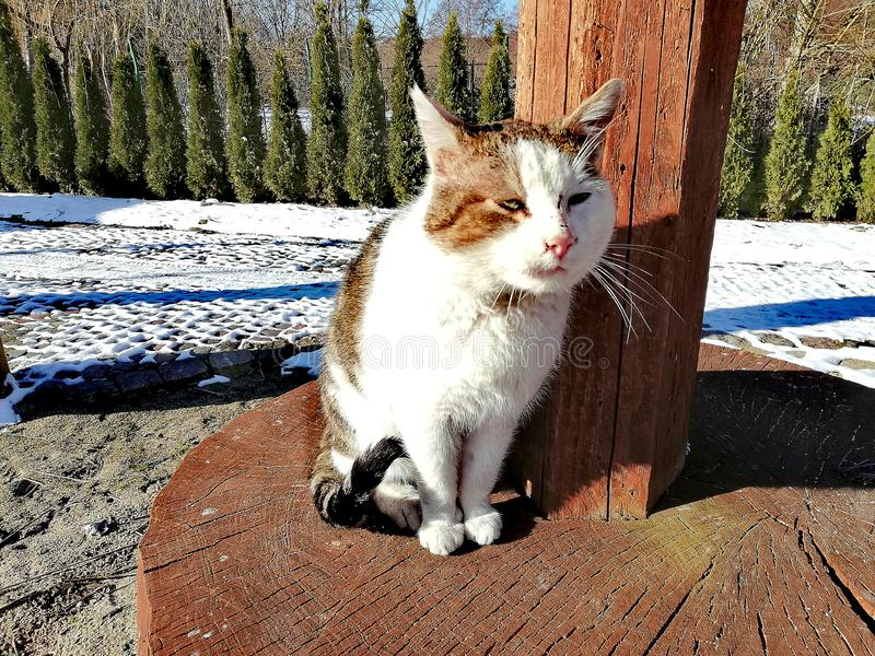 März-Katze und die ersten sonnigen Tage lizenzfreies stockfoto