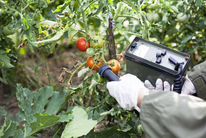 Mäta utstrålning jämnar av tomaten royaltyfri fotografi