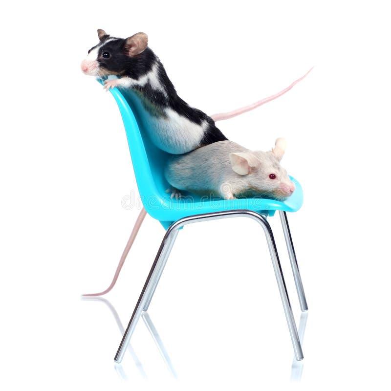 Mäuse stockfotografie