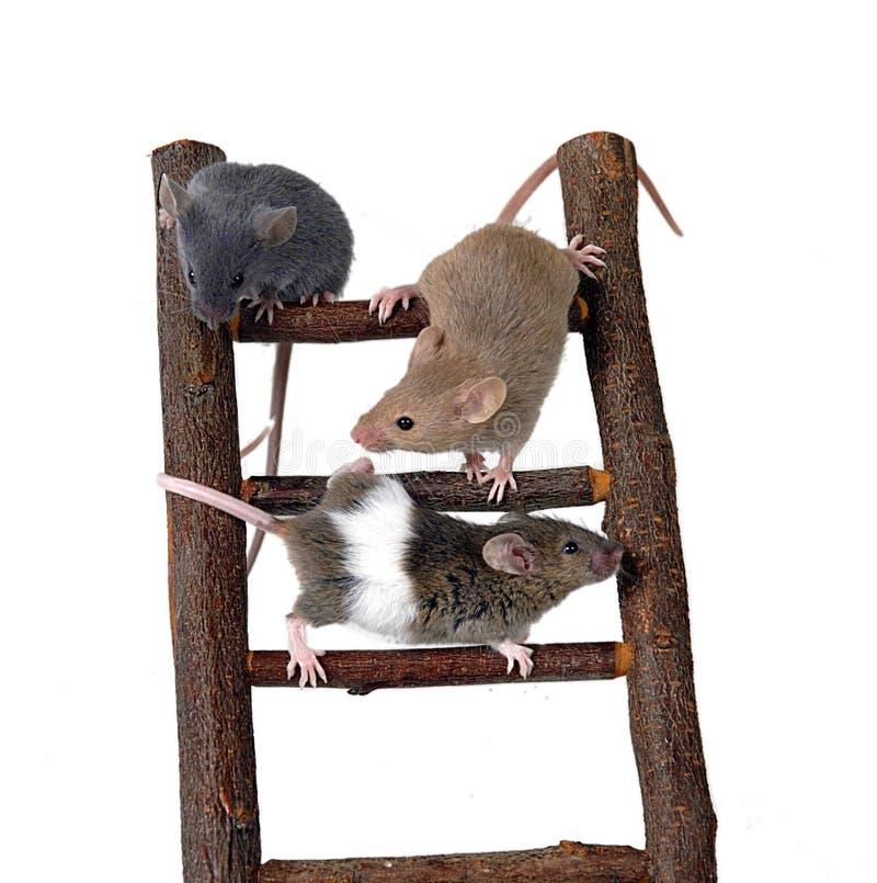 Mäuse auf Spielzeugtreppenhaus stockbild